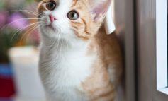 De geheimen van een goed kattenluik