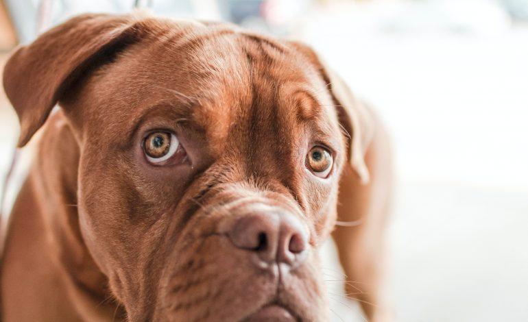 Een huisdier: wat moet je regelen?