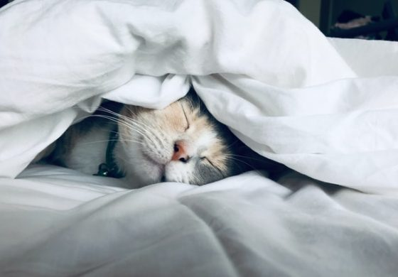 Waarom een kat je leven verrijkt